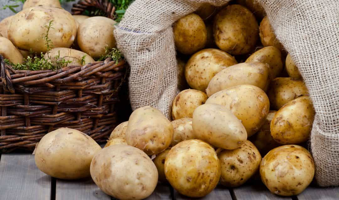 Krompir, temelj svetovne prehrane